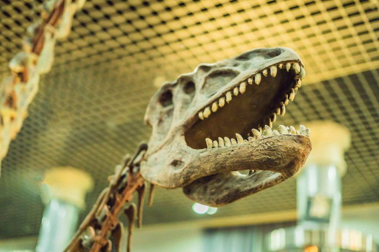 Dinosaur skull at Beijing museum
