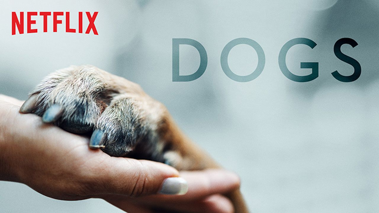 How to get your dog on the Netflix show 'Dogs'