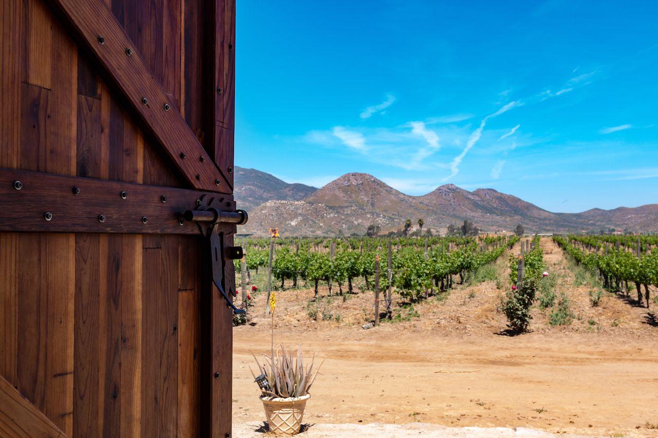 Door opening to a vineyard in Ensenada, Baja California, Mexico