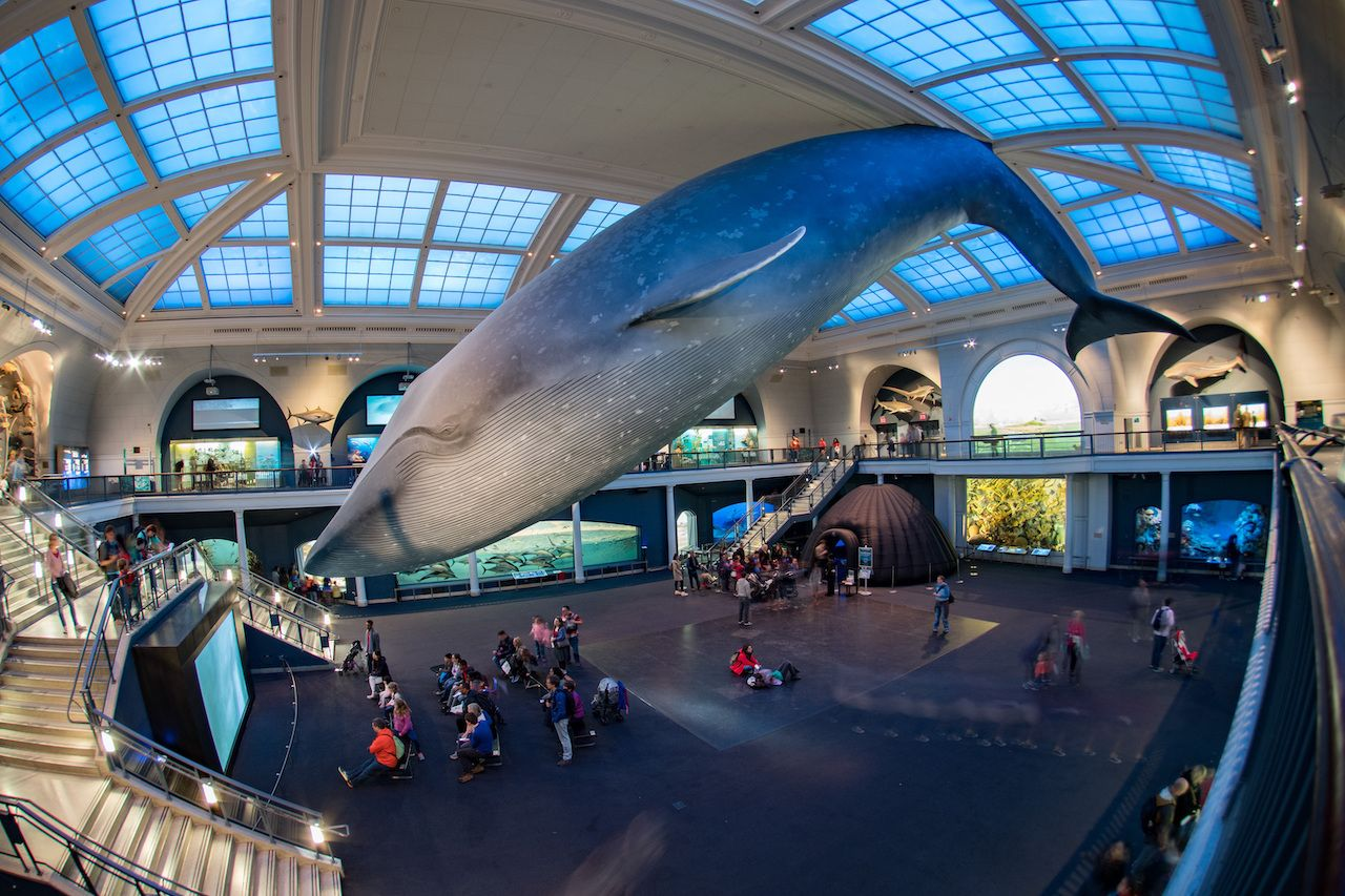 Hall of Ocean Life at American Museum of Natural History in New York City