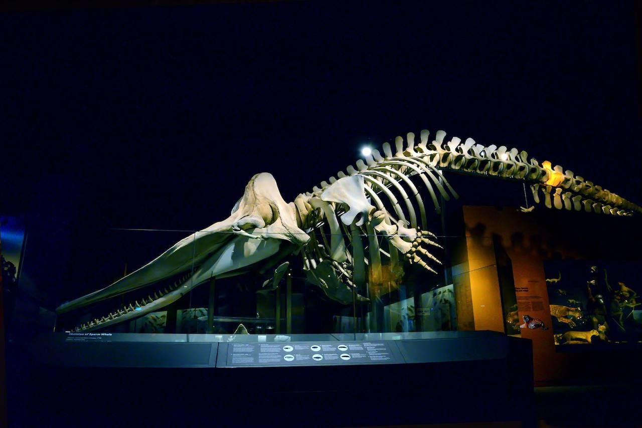 Lee Kong Chian Natural History Museum in Singapore