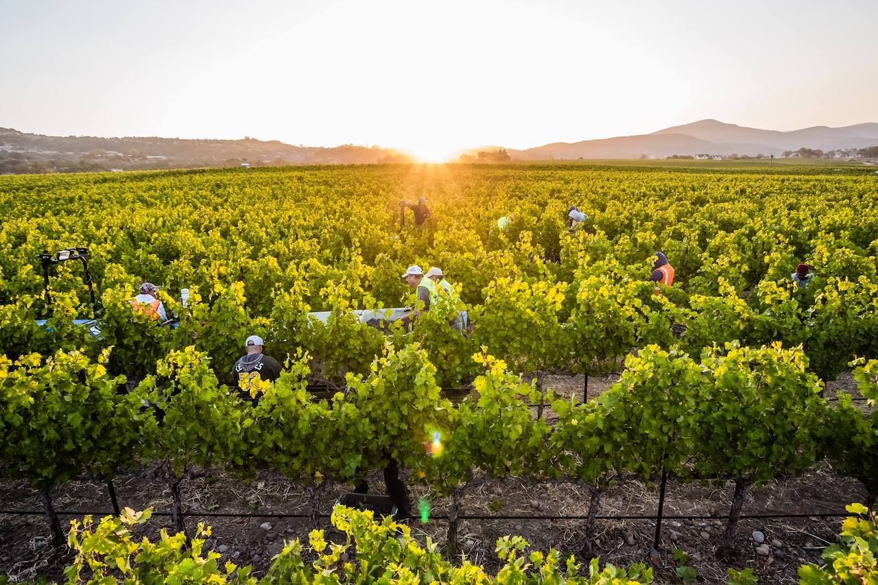 100 percent sustainability by the end of 2019.. The post How Sonoma became America's most sustainable wine region appeared first on Matador Network..