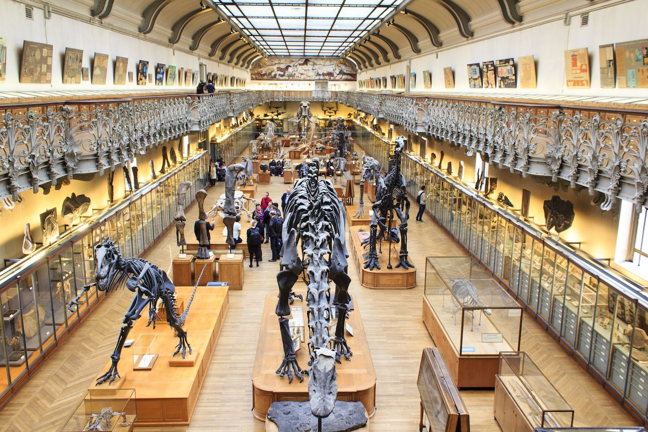 Skeletons of dinosours in the National Museum of Natural History in Paris