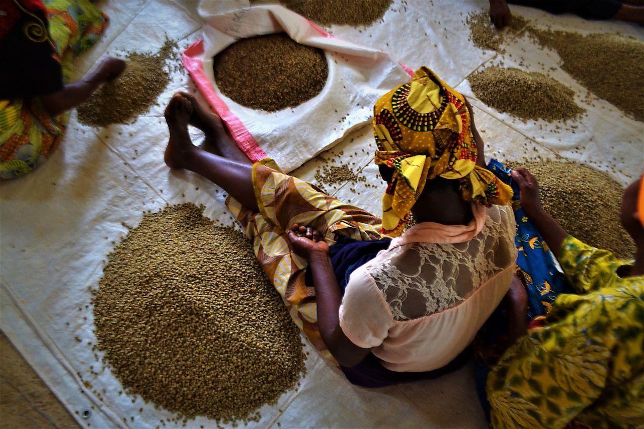 women picking beans, Rwanda