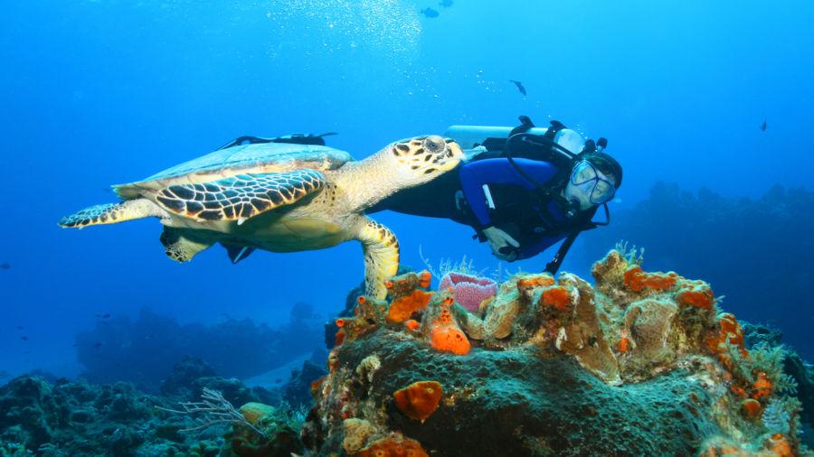 Cozumel is every drift diver's dream
