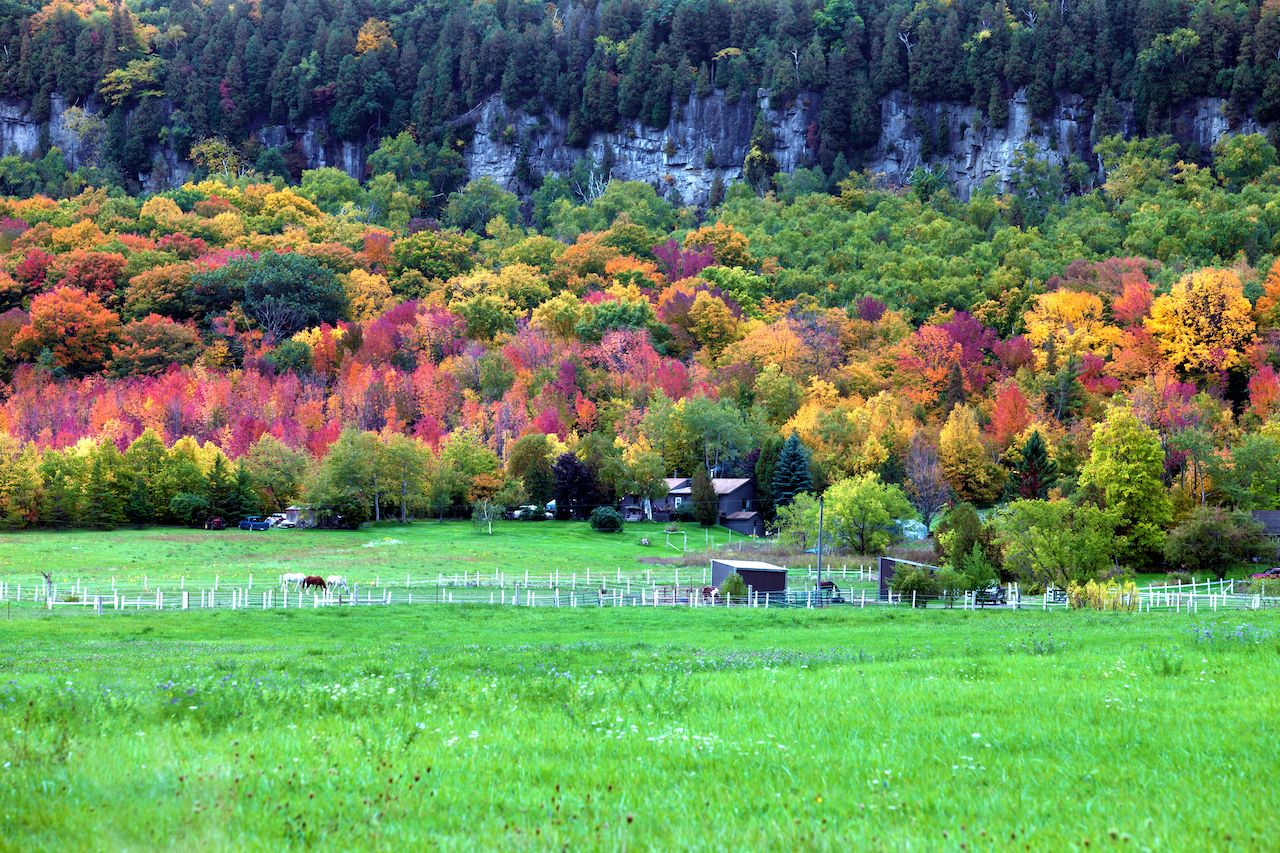 Horses gazing in fall colors of Niagara escarpment, Milton, ON, Canada