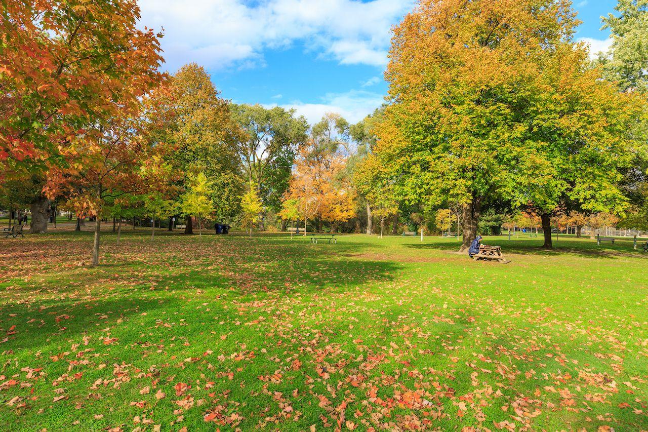 Trinity Bellwoods park in Toronto