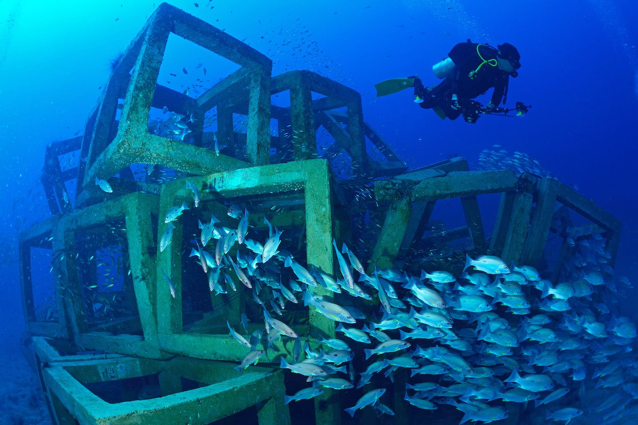 Fish around artificial reef