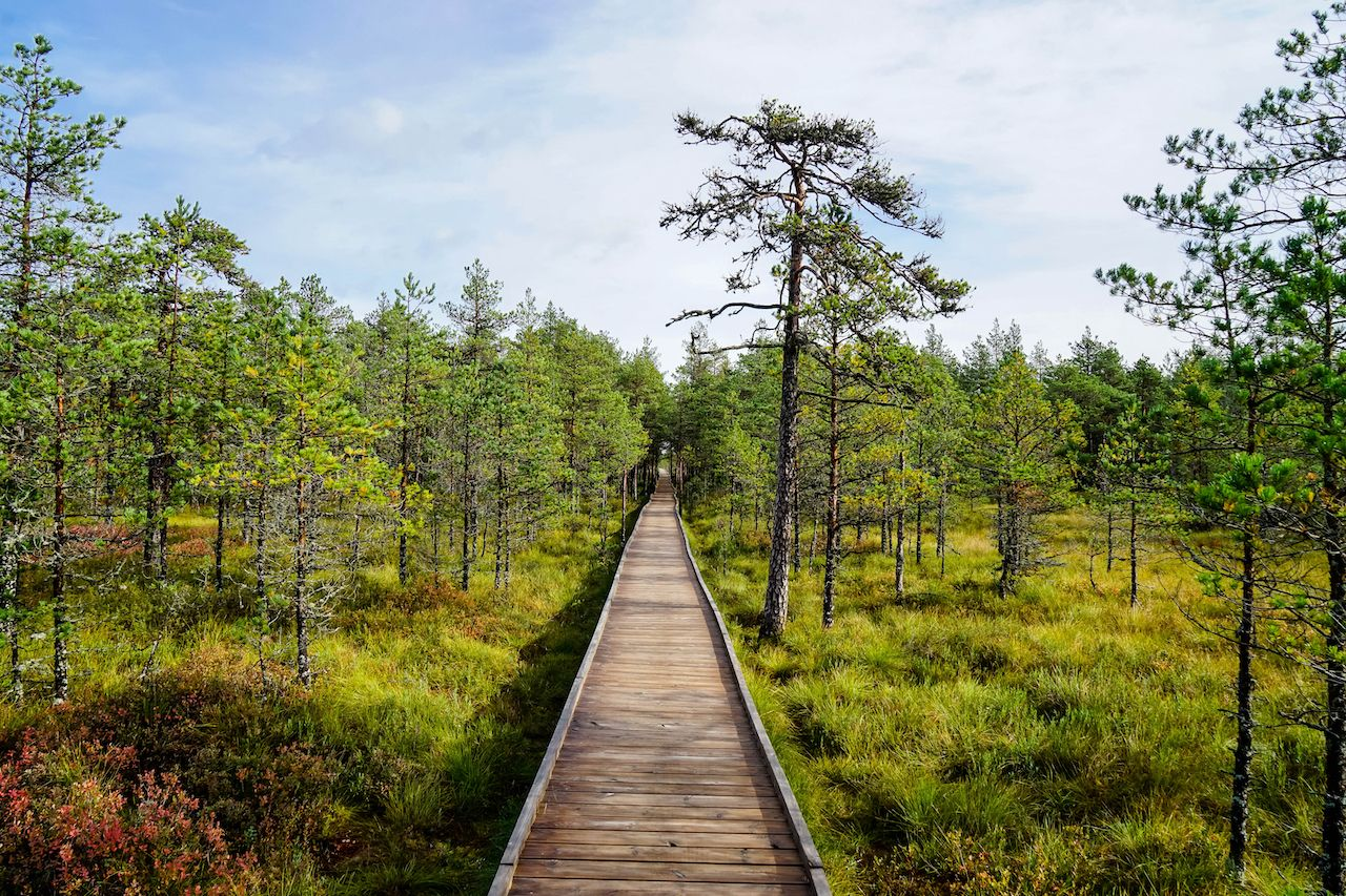 Lahemaa National Park In Estonia