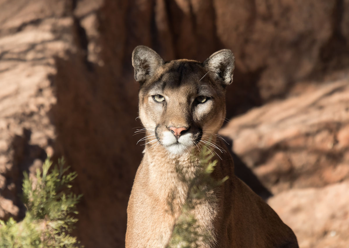 8 places to encounter wild animals up close in the US