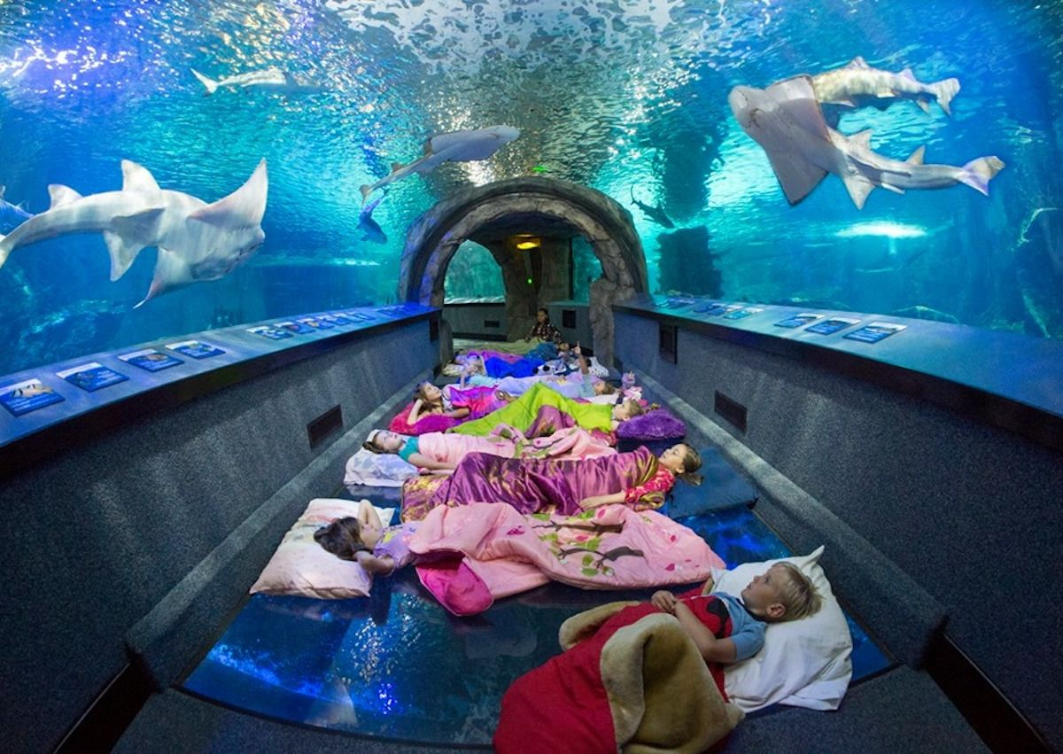 These museums, zoos, and aquariums will let you spend the night with their animals