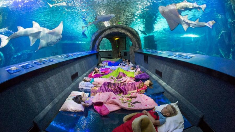 These museums, zoos, and aquariums will let you spend the night
