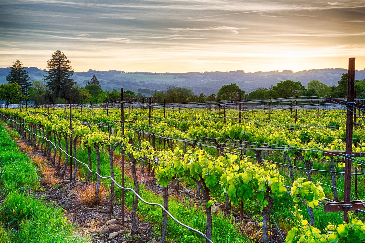 Sunset over vineyards in California's wine country