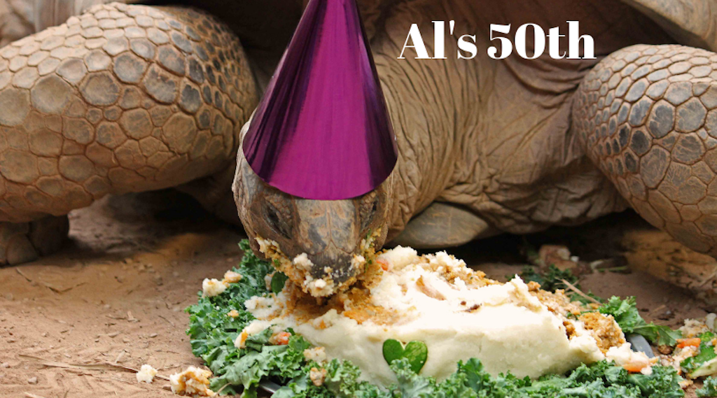 Tortoise eating fruit cake