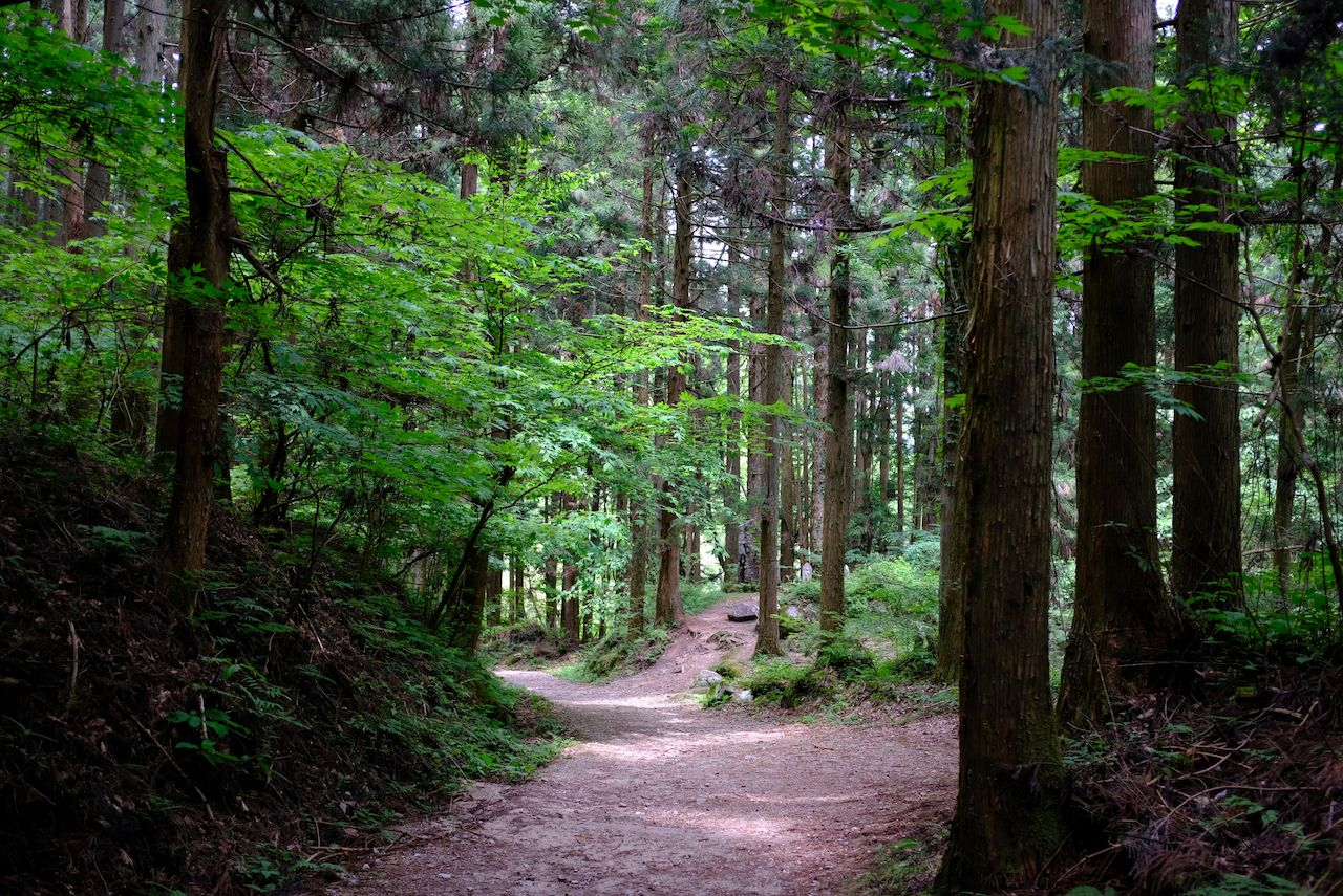 A walking path on the famous Nakasendo trail