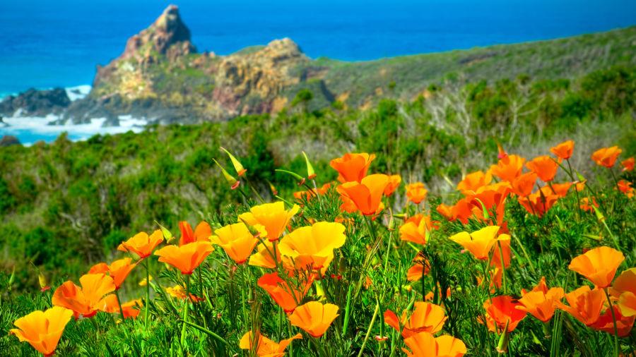 5 amazing Northern California wellness destinations