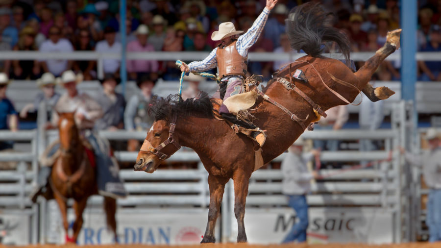 Why everyone should go see a rodeo once in their lives