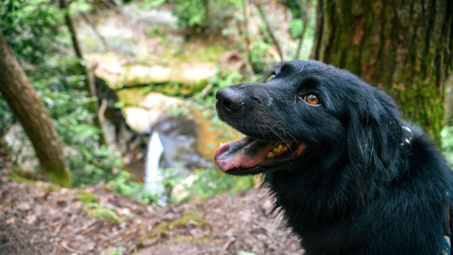 The 7 best US national parks to experience with your dog
