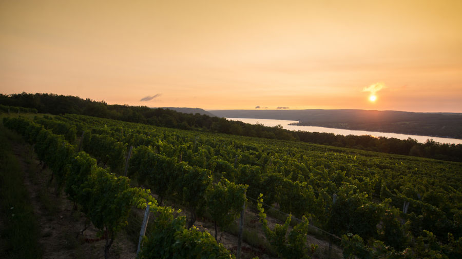 Climate change is here. Finger Lakes winemakers have a plan to fight it.