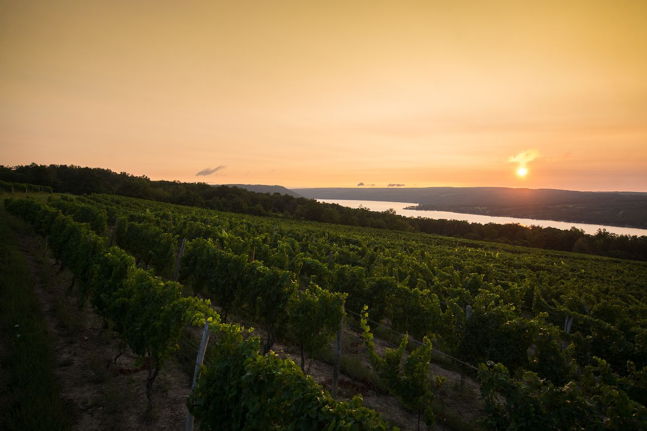 Wine is, hopefully, here to stay. . The post Climate change is here. Finger Lakes winemakers have a plan to fight it. appeared first on Matador Network..