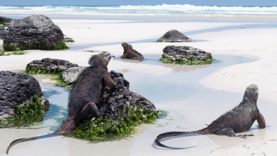 The Galapagos' entry fee is getting a sharp increase to deter tourists