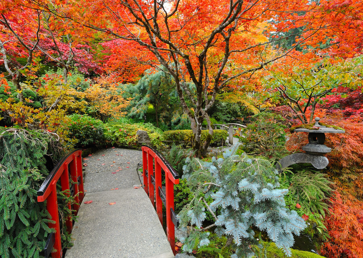 How to see the fall colors on Victoria Island
