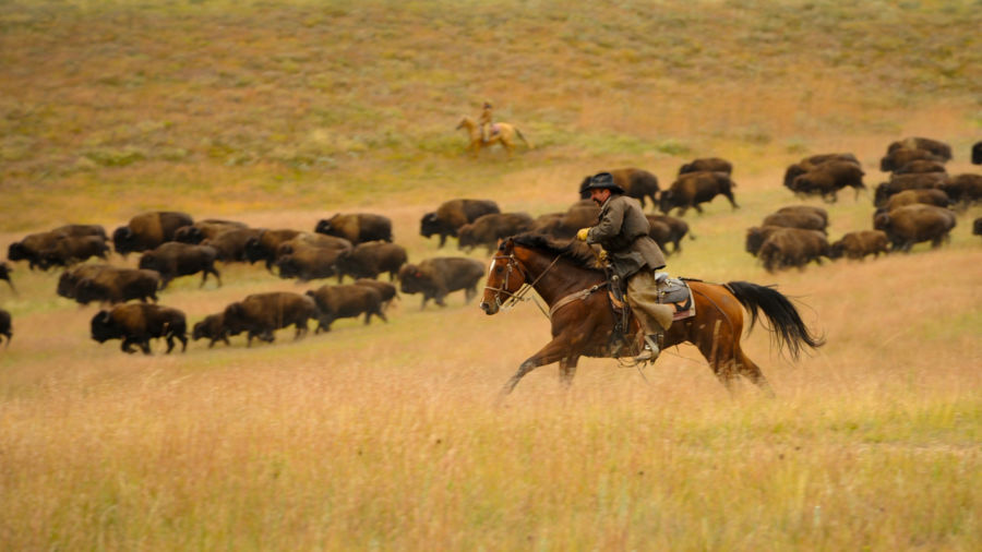 Catch the thrill of the Old West at South Dakota's annual bison roundup