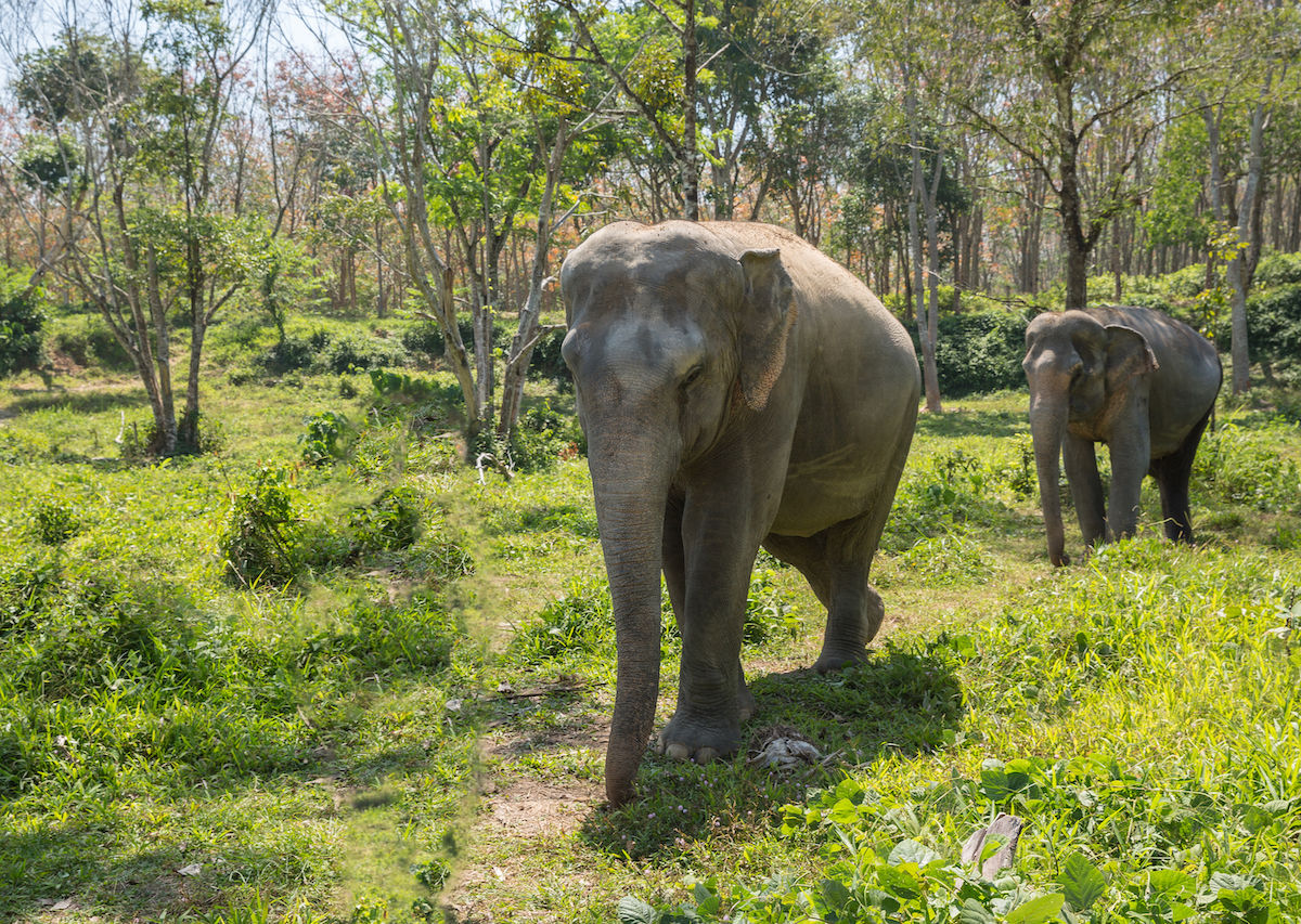 Intrepid Travel stops elephant rides