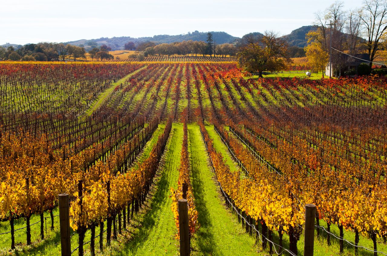 Fall vineyards near Healdsburg, California
