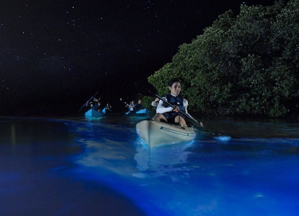How to experience the magic of Puerto Rico's surreal bioluminescent bays