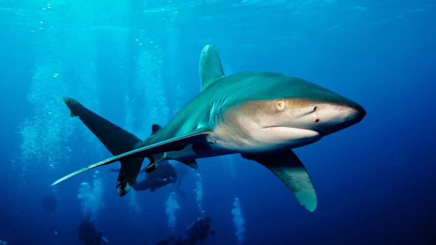 A tourist in French Polynesia lost both hands in a rare shark attack