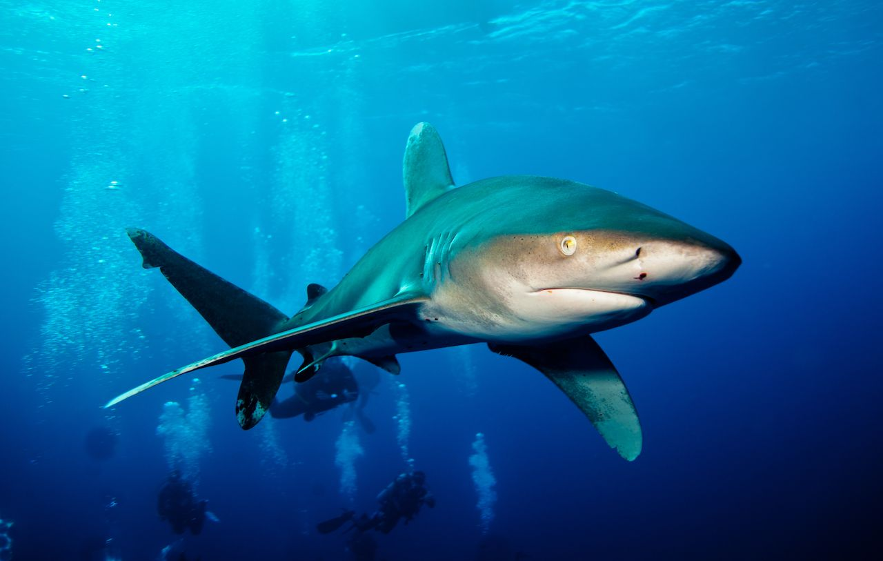 Tourist loses hands in shark attack