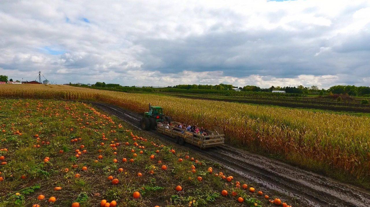 Siegel's Cottonwood Farm
