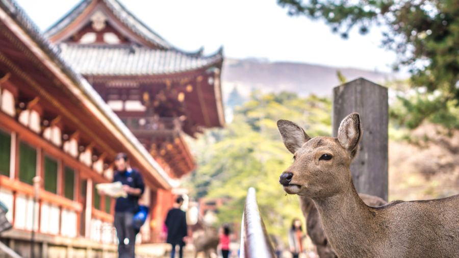 From sacred deer to mochi, Nara deserves a spot on your cultural tour of Japan