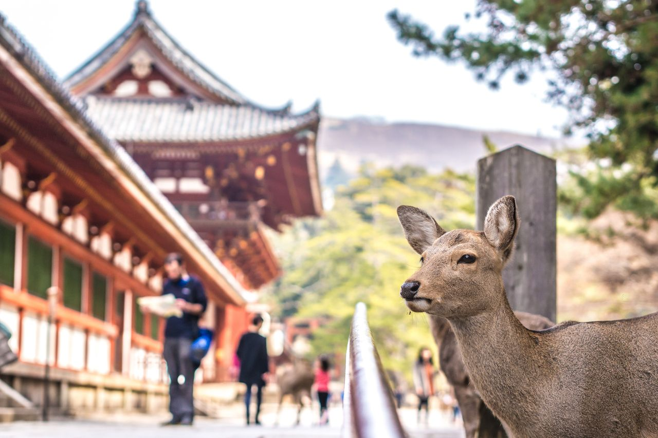 The best things to do in Nara, Japan
