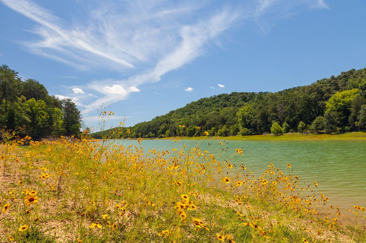 View of wildflowers and lake at Panther Creek State Park
