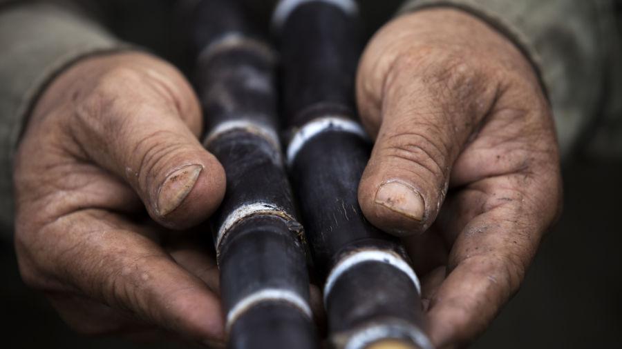 This rum distillery is helping Hawaii's heirloom sugarcane thrive once again