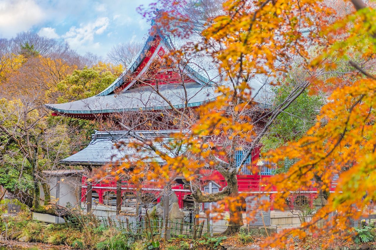 Autumn foliage overlooking a japanese temple Benzaiten in the forest parc of Inokashira in Kichijoji city