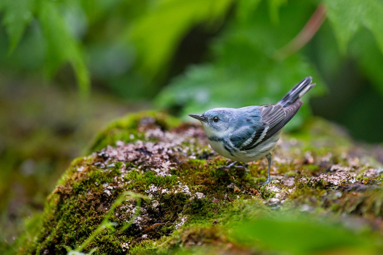 10 species saved by conservation