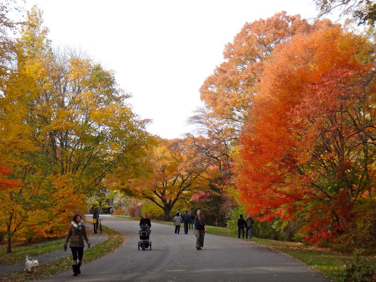 Fall foliage at Arnold Arboretum in Jamaica Plain