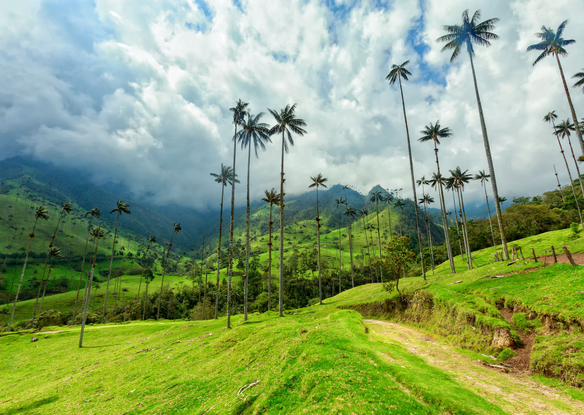 Colombia's Cocora Valley Hike