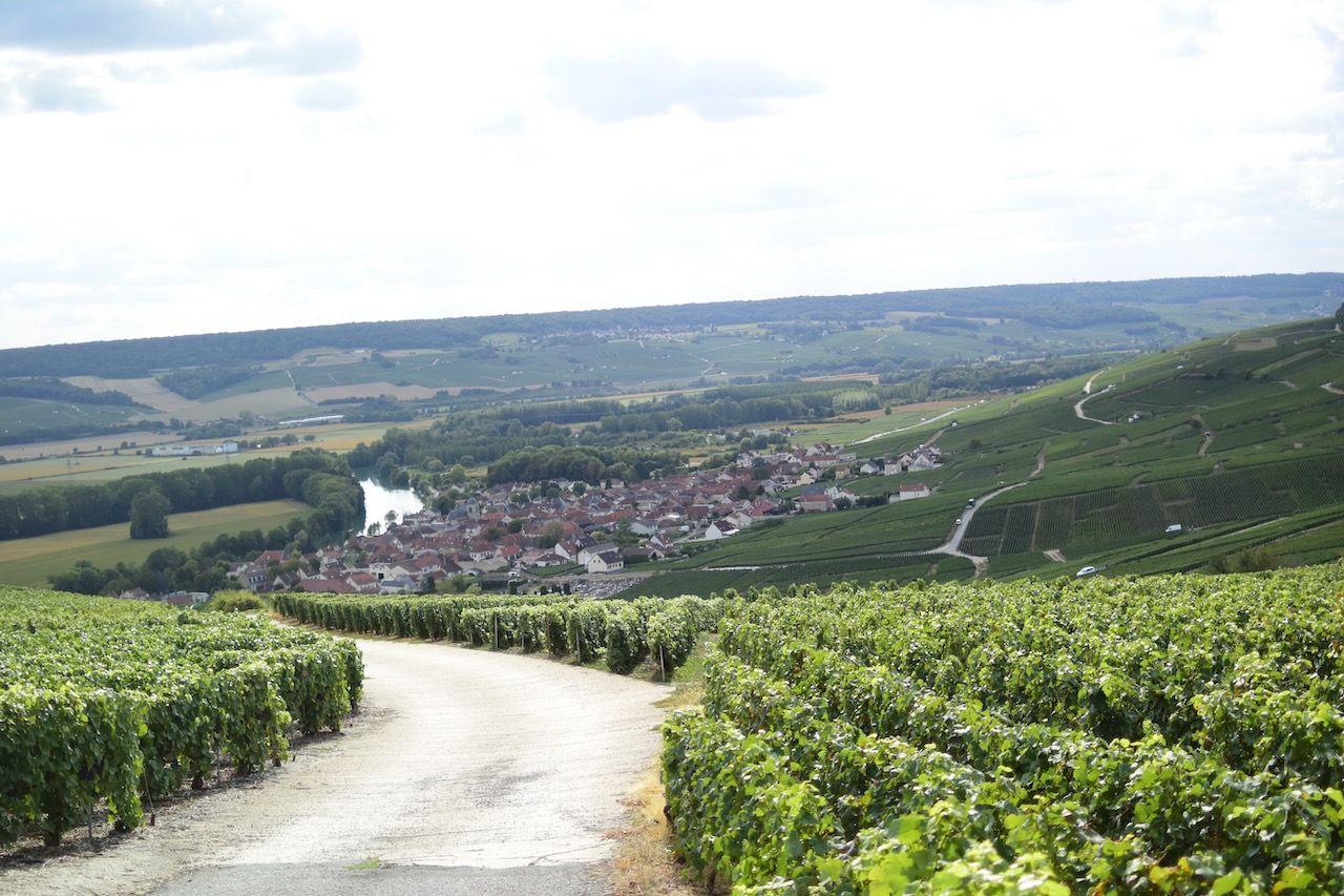 champagne-vineyards-sustainability