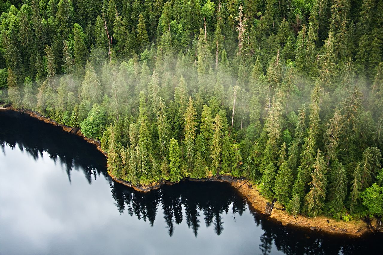Aerial view of the mist hanging in the Tongass temperate rain forest