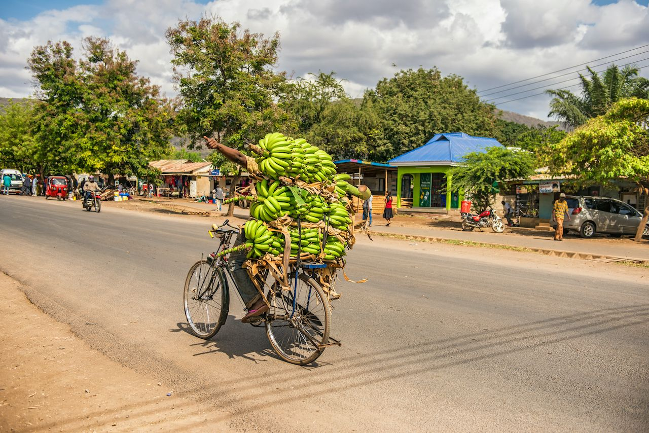 African man traveling on a bike with a bunch of bananas