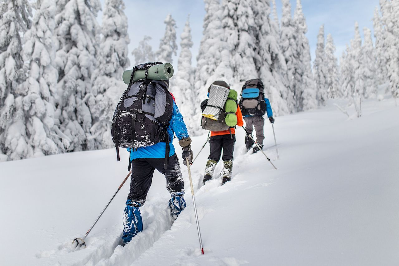 Group of skiers hiking with a backpack in winter mountains and forest