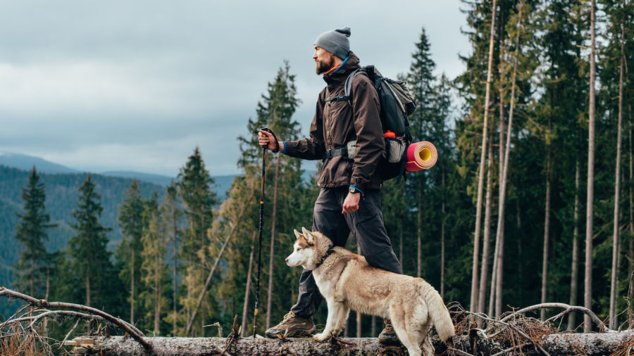 The 10 best US national forests to visit with a dog