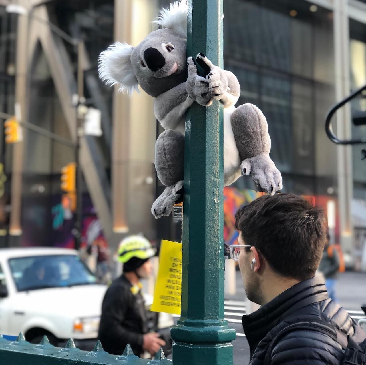 Koala on a post