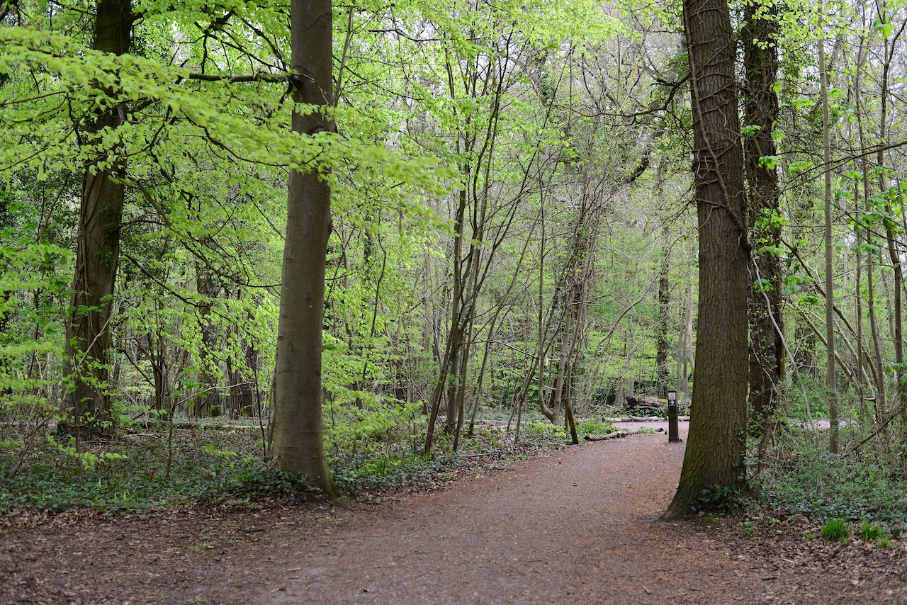 Leigh Woods National Nature Reserv