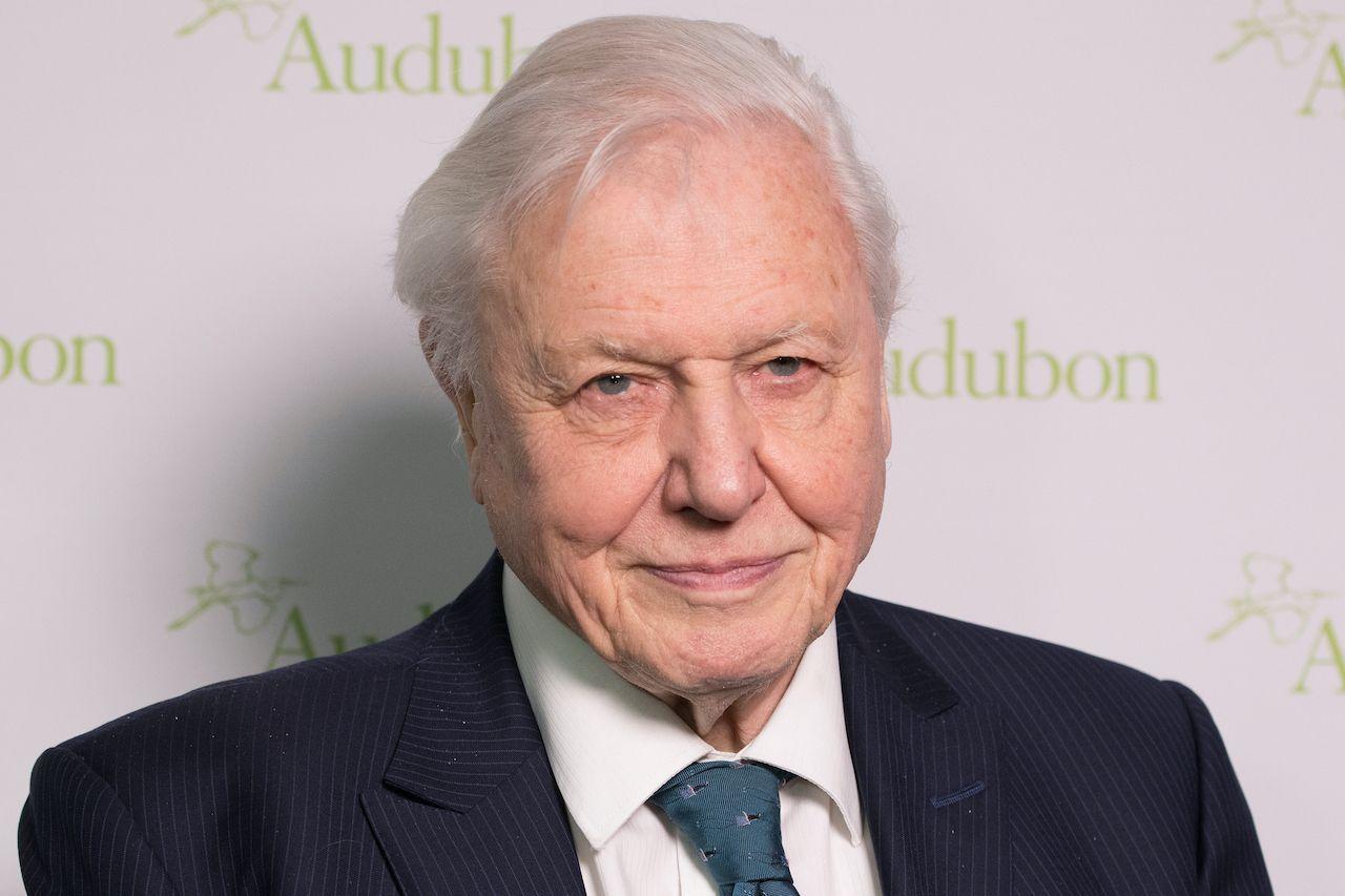 David Attenborough documentary