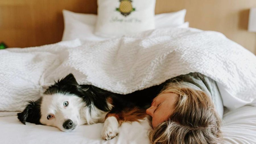 The best hotels around the world for your dog